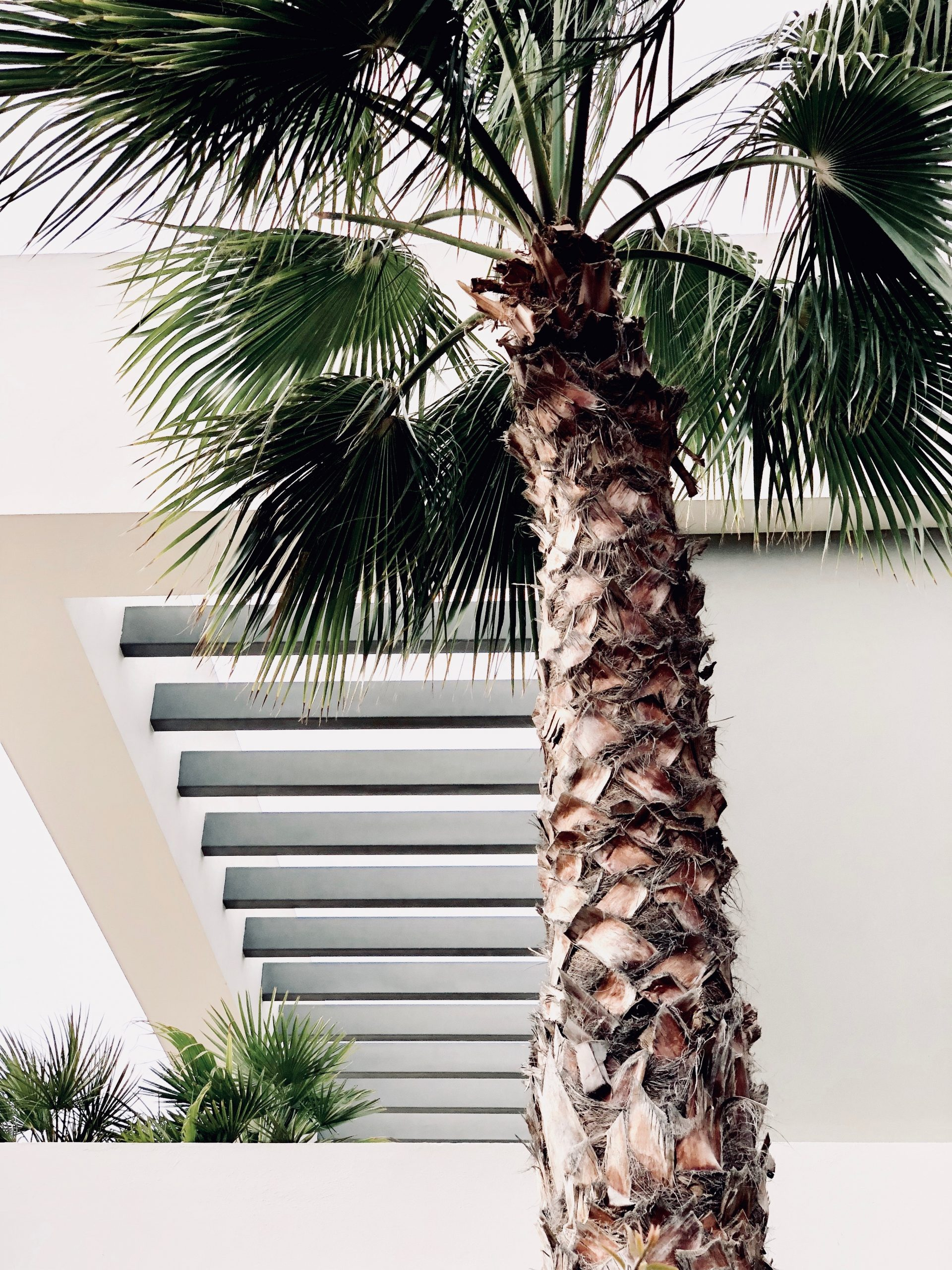 Palm Trees – Uses And Locations