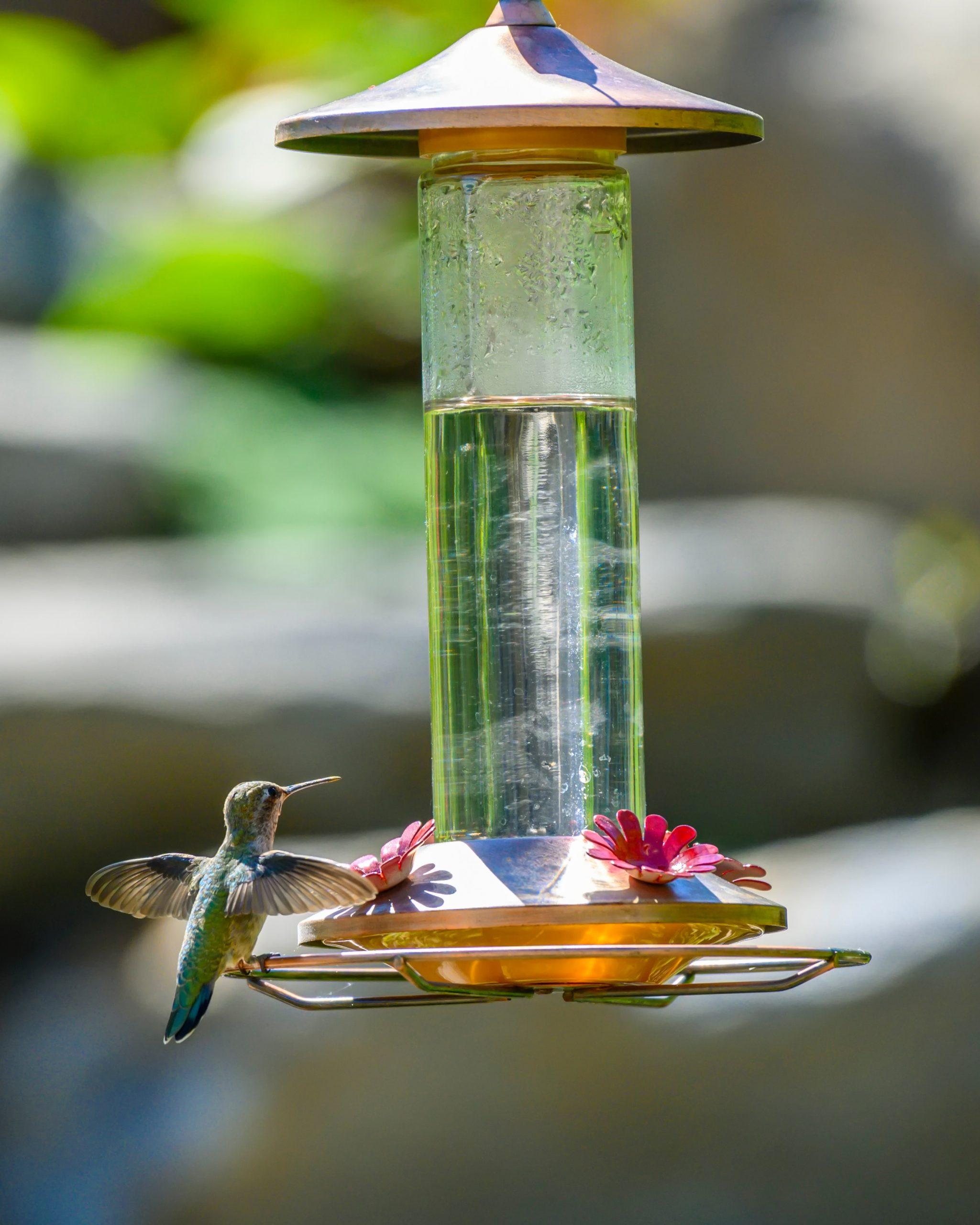 Do you feed the birds in your garden?