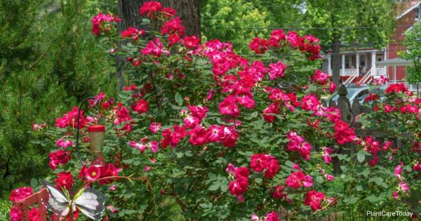 7 Surprising Household Items Used In Gardening