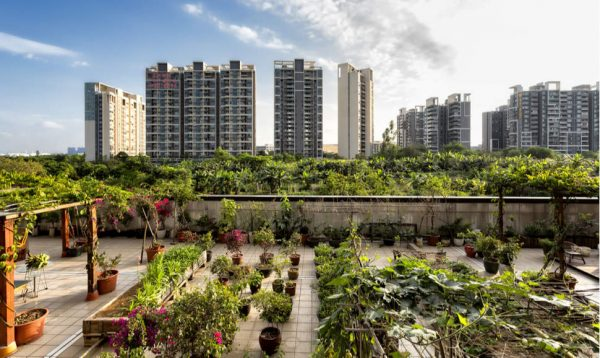 How 16 initiatives are changing urban agriculture through tech and innovation