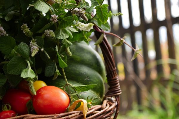 Urban Farming: A Budding Investment Opportunity in Real Estate