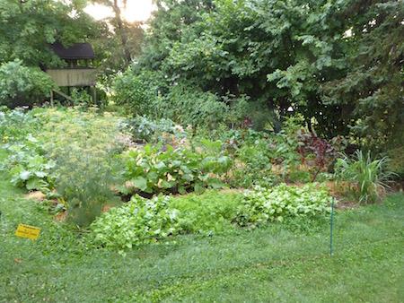 Scenes from the Mid-Summer Vegetable Garden
