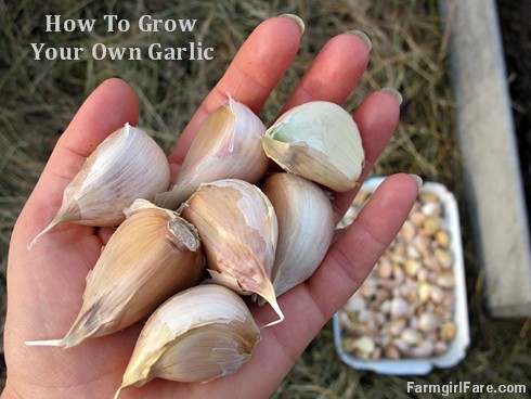 How To Grow Your Own Garlic (and How To Not Get Any Planted): Garden Journal 1/1/13
