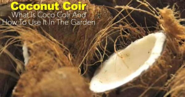 What Is Coco Coir? How To Use Coconut Coir In The Garden