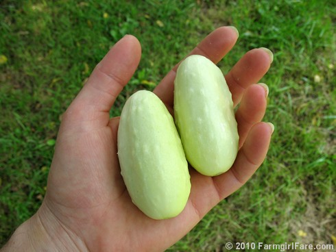 Growing Miniature White Cucumbers from Seed in Fall? Maybe.