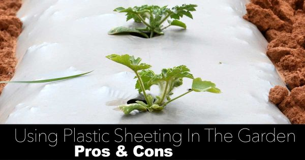 How To Use Garden Plastic Sheeting And Black Plastic Mulch In The Garden [PROS & CONS]