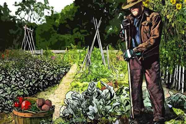 How to grow your own food in a modern-day victory garden
