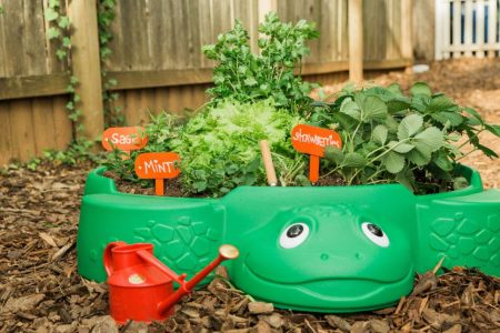 Gardening Projects Kids Will Love