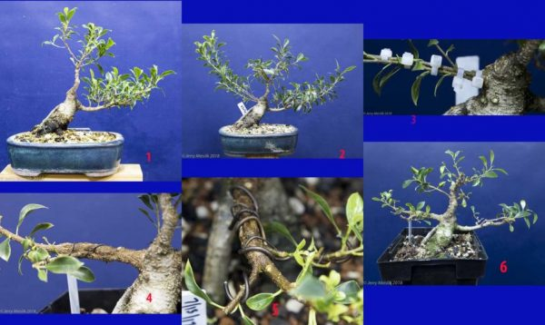 Prunus #9 – now with blossoms