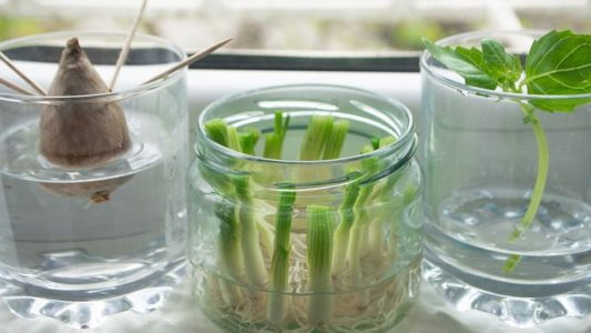 The Easiest Gardening Trick Ever: Vegetables You Can Regrow in Nothing but Water