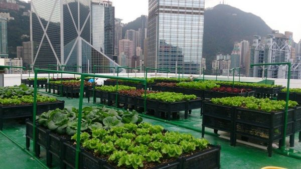 Gardens of the World: Growing Influences
