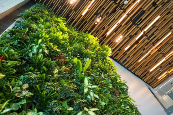 Living Sustainably: Put nature to work for more effective gardening