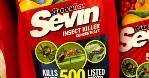 Will Sevin Spray Kill Aphids?